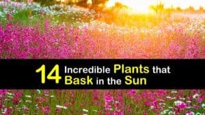 Amazing Plants for Full Sun titleimg1