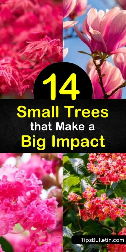 Utilize as much space possible in tiny yards by planting a small tree like the crabapple, crape myrtle, redbud, or other flowering trees. Small trees have the loveliest blooms in early spring and vibrant fall color that turns your front yard into the prettiest on the block. #small #trees #yard