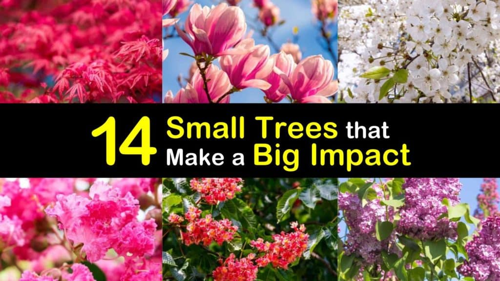 Amazing Small Trees for Front Yard titleimg1