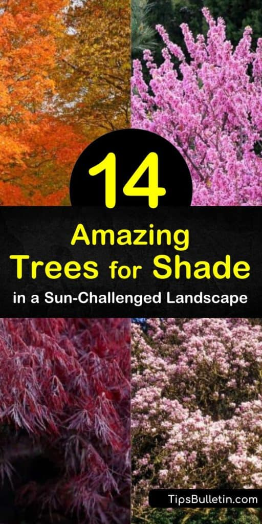 Discover which trees grow in the shade of large trees to complete the landscape. Enjoy fall color with red oak, weeping willow, and sugar maple, and plant flowering trees such as the tulip tree, magnolia, and dogwood for seasonal color. #shade #trees