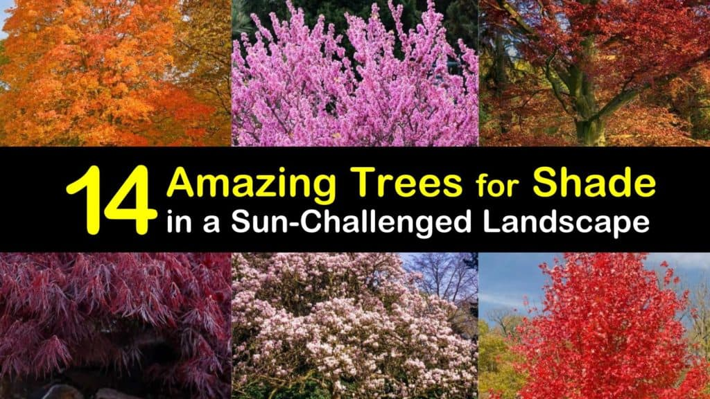 Amazing Trees for Shade titleimg1
