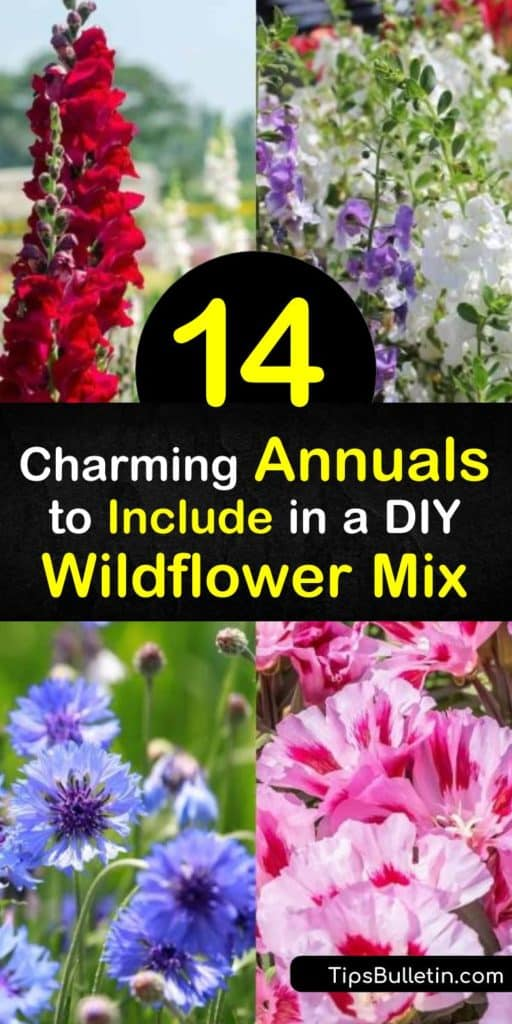 Learn how to make your own wildflower seed mix. Choose among beautiful plants including spiky lupine, blue-hued cornflower, and sunny coreopsis. Discover best practices for creating a wildflower garden, including seeding properly and growing in full sun. #annuals #wildflowers #seeds