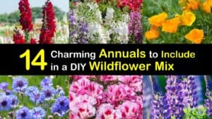 Annuals for a Wildflower Mix titleimg1