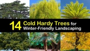 Cold Hardy Trees titleimg1