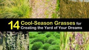 Cool Season Grasses titleimg1