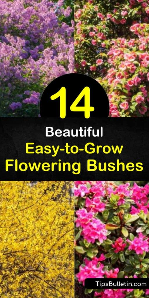 Discover how to create a low-maintenance landscape with easy-growing flowering bushes. Enjoy flowers from spring to late summer and fall foliage with spirea, hibiscus, forsythia, azalea, and other hardy shrubs. #easy #growing #flowering #bushes #shrubs