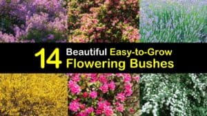 Easy to Grow Flowering Bushes titleimg1