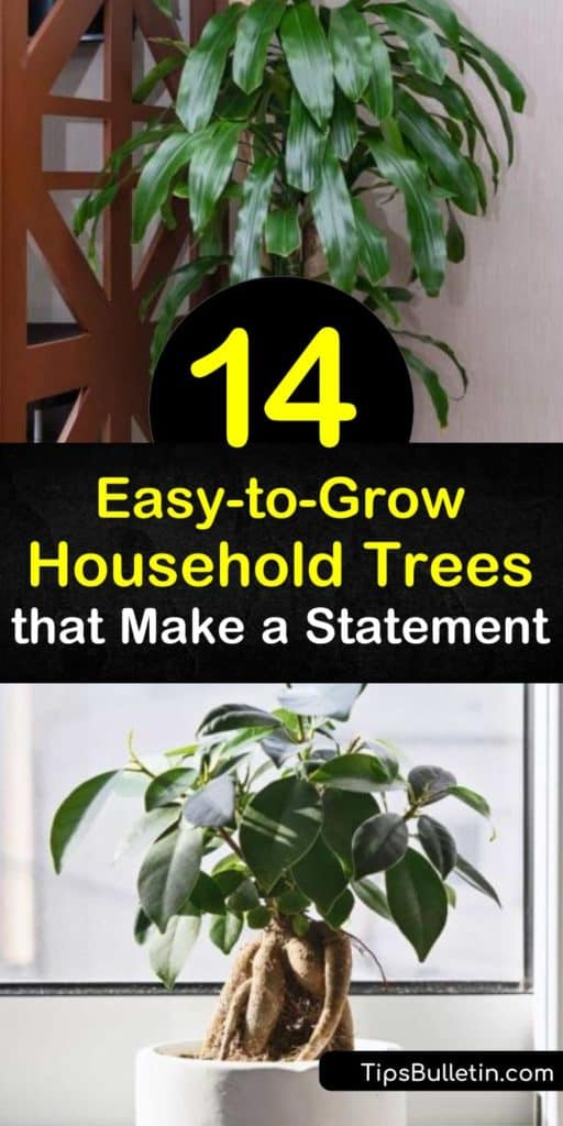 Make a statement in your home decor with a dragon tree, rubber tree, money tree, or other trees that are easy to grow. Whether you like a ficus or yucca tree, this list has plants that tolerate indirect light, bright light, low light, and any other conditions you throw at them. #easy #indoor #trees