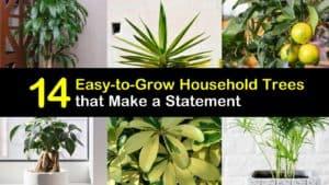 Easy to Grow Indoor Trees titleimg1