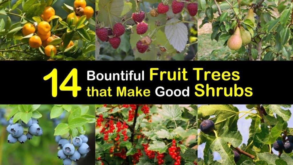 Fruit Trees as Shrubs titleimg1