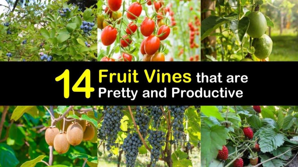 Fruit Vines titleimg1