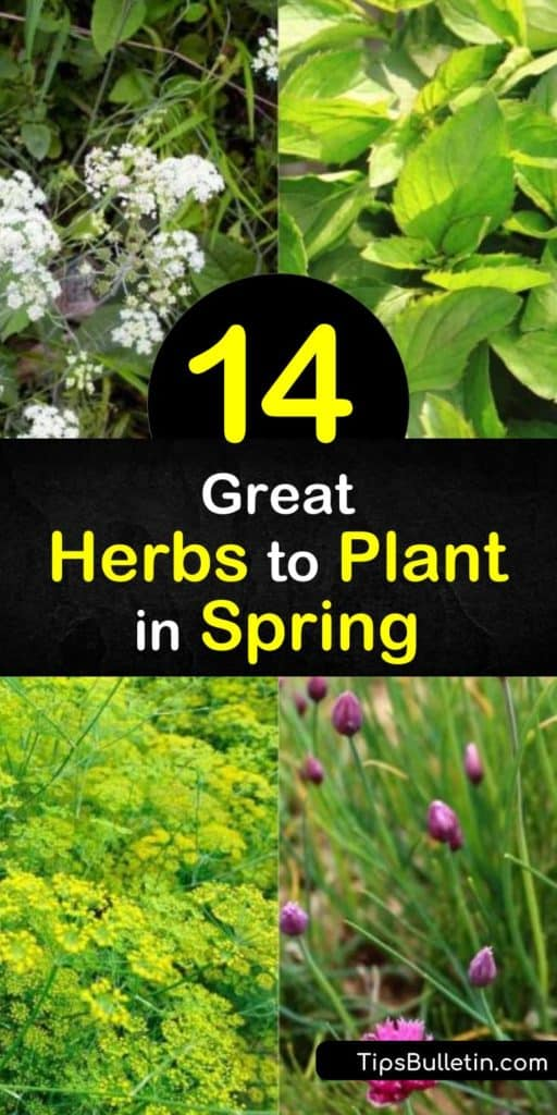 Jump start the season by growing an herb garden in early spring. Plant annual herbs such as chervil, basil, and cilantro, or perennials like lemon balm, tarragon, and chives to add flavor and fragrance to savory dishes. #spring #herbs #planting