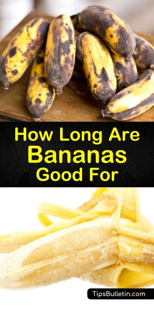 To store them correctly you must know how long do bananas last. Store unripe bananas at room temperature and ripe bananas in the fridge to extend their shelf life. The best way to speed up the ripening process is to place green bananas inside a brown paper bag. #banana #ripe #spoil