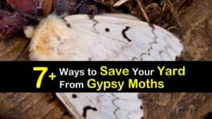 How to Get Rid of Gypsy Moths titleimg1