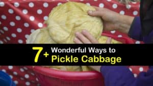 How to Pickle Cabbage titleimg1