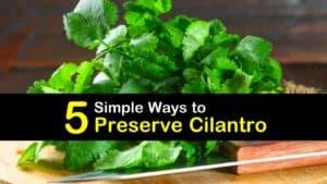 How to Preserve Cilantro titleimg1