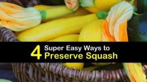 How to Preserve Squash titleimg1