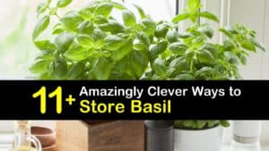 How to Store Basil titleimg1