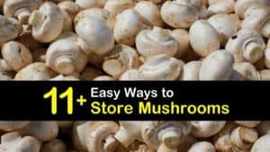 How to Store Mushrooms titleimg1