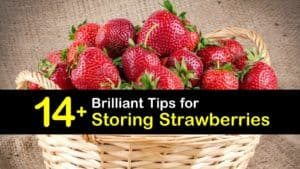 How to Store Strawberries titleimg1