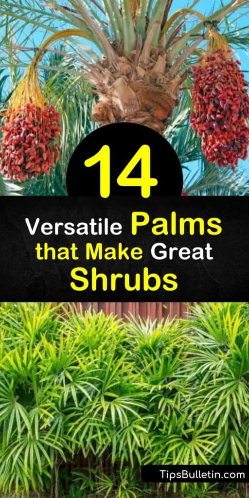 Utilize small palm trees and cycads like the windmill palm, sago palm, sabal palm and mexican fan palm around your home to add a touch of tropics in a subtle way. These Florida trees only need a moist root ball and full sun to transform your yard. #palm #trees #shrubs
