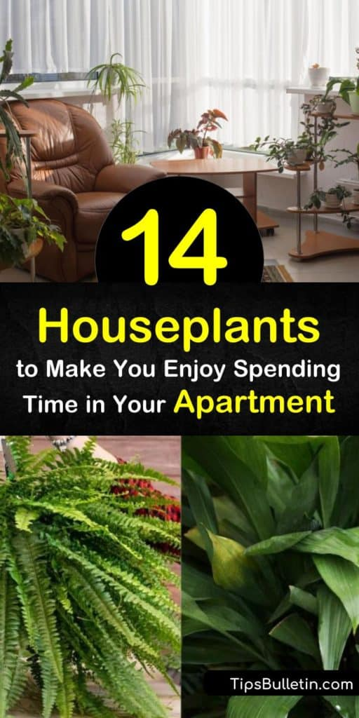 Discover the best plants for apartment living. Whether you're looking for low light or low maintenance, these species thrive in small spaces. Try snake plant for stiff upright leaves, the pothos vine for heart-shaped ones, or an arching spider plant. #plants #apartment