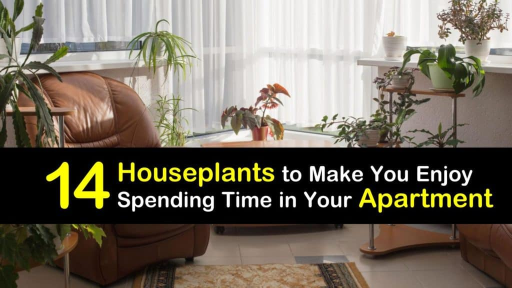 Plants for Apartments titleimg1