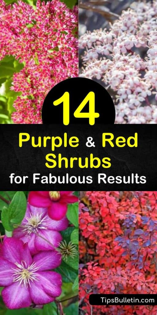 Add these purple and red shrubs to your garden for a colorful collection of flowers and leaves. Coordinate an area with purple foliage and lovely blooms to match. These stunning combinations of royal purple and reds also work well with white and pink flowers. #purple #red #shrubs #bushes