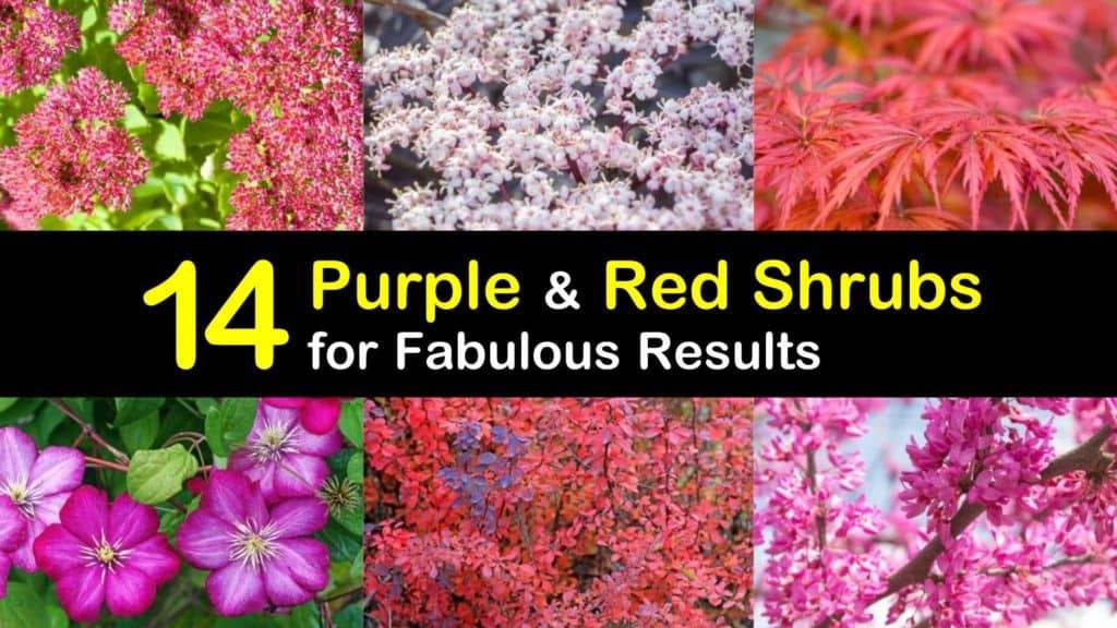 Purple and Red Shrubs titleimg1