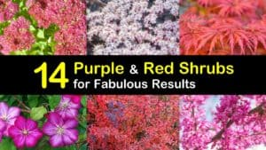 Purple and Red Shrubs titleimg1