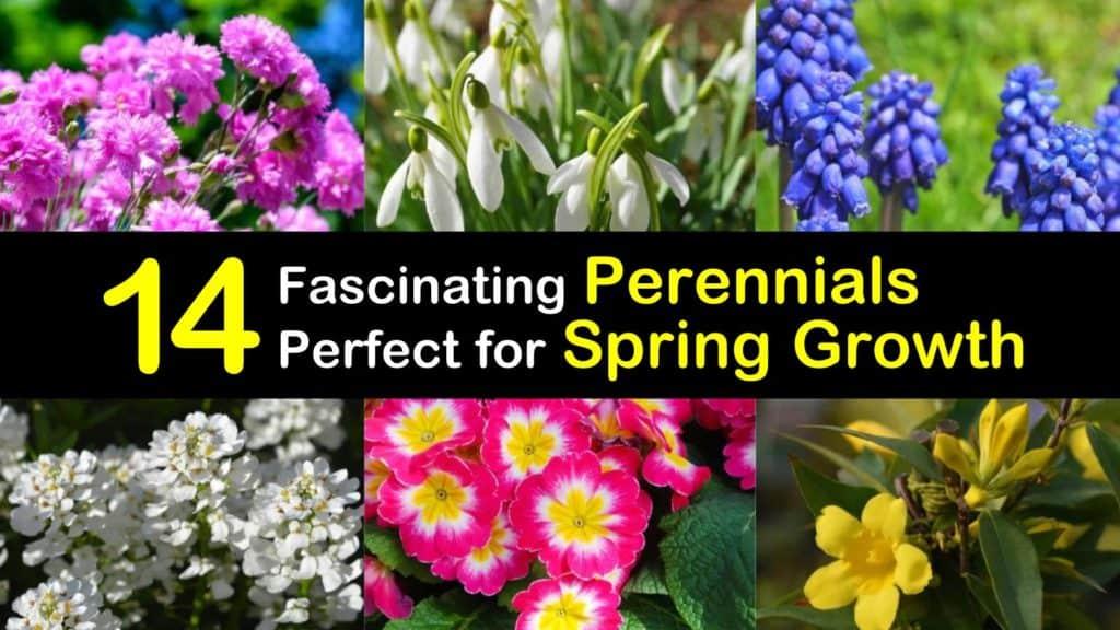 Spring Blooming Perennials titleimg1