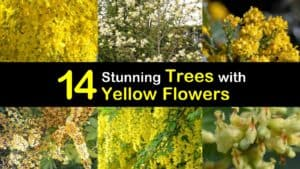 Trees with Yellow Flowers titleimg1