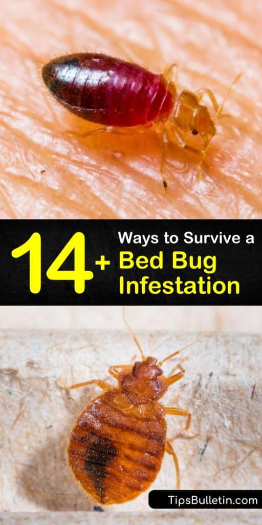 Adult bed bugs and nymphs hide in crevices, mattress seams, and other hiding places during the day and leave you with bedbug bites during the night. Learn how to kill and prevent bed bugs using homemade insecticides and prevention methods. #bedbugs #howto #getridof #infestation