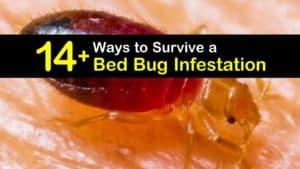 Bed Bug Infestation titleimg1