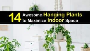 Best Indoor Hanging Plants titleimg1