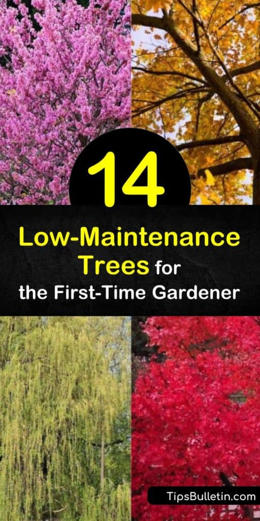 Discover some of the easiest trees to grow so that you can enjoy the benefits of fast-growing shade trees. Try the red maple, with its showy fall foliage; the hybrid poplar, with its incredible growth rate; or the delicately arching weeping willow. #trees #easy #growing