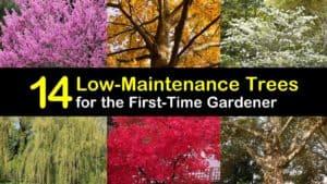 Easy to Grow Trees titleimg1