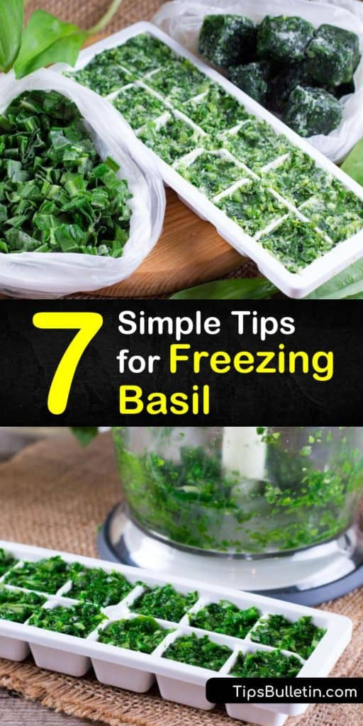 Utilize common tools in your kitchen, like your food processor, freezer bag, and ice cube trays in order to use your basil plant to its fullest potential. Apply these tips for keeping frozen basil in the freezer to all your fresh herbs in the kitchen. #howto #freeze #basil