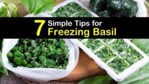 How to Freeze Basil titleimg1
