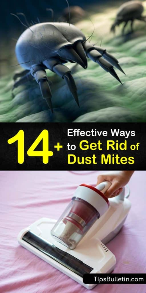 It's important to take steps to kill dust mites in your home if you have a dust mite allergy to prevent allergic reactions such as sneezing. Learn how to get rid of dust mites by vacuuming, and using a HEPA filter and dehumidifier. #howto #getridof #dustmites