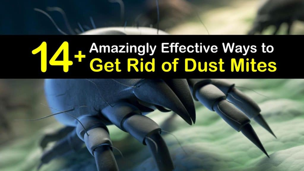 How to Get Rid of Dust Mites titleimg1