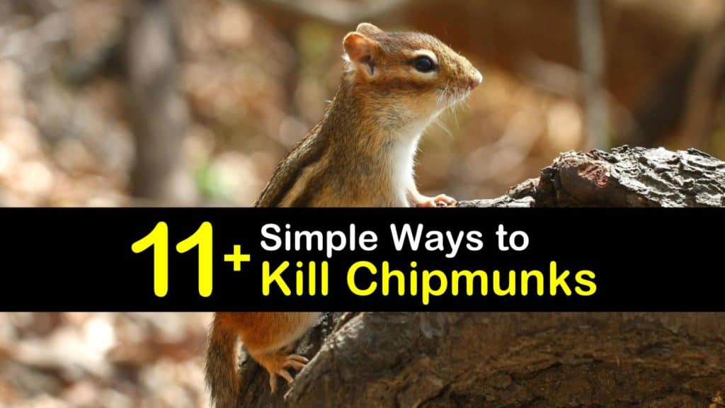 How to Kill Chipmunks titleimg1
