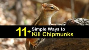 How to Kill Chipmunks titleimg1
