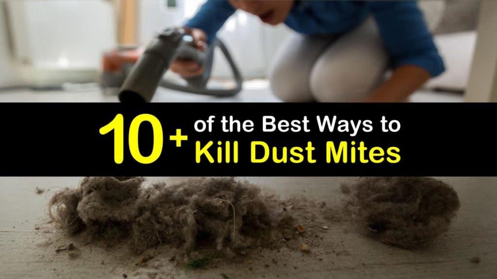 How to Kill Dust Mites titleimg1