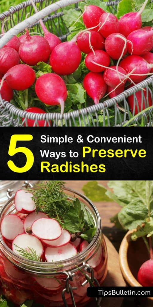 Radishes are zesty and sweet, but only last so long on the counter. Learn how to preserve these root veggies in the root cellar, fridge, or freezer, and make pesto for tacos, or pickle radishes for your favorite vegan radish recipe. #preserve #howto #radishes