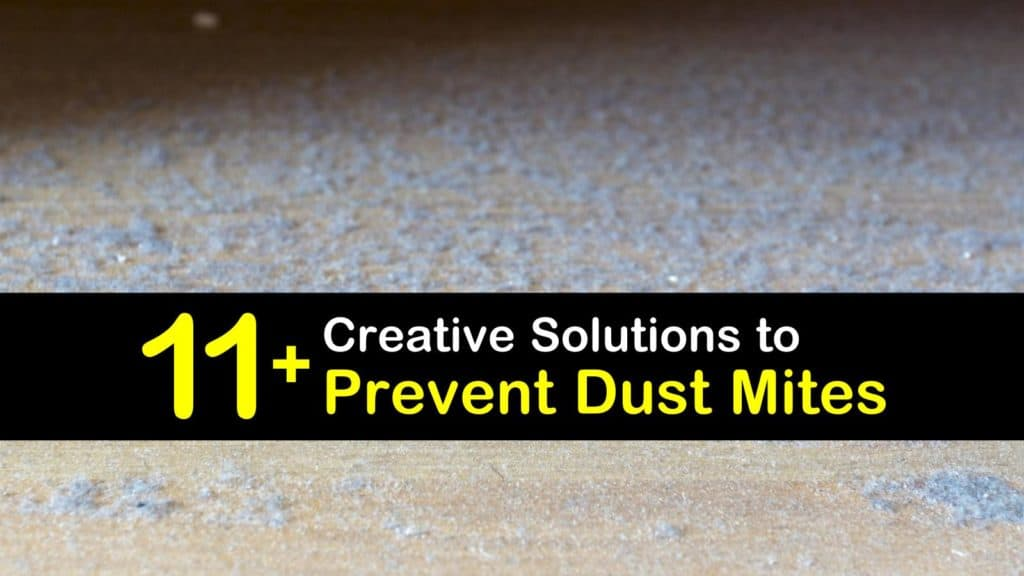 How to Prevent Dust Mites titleimg1