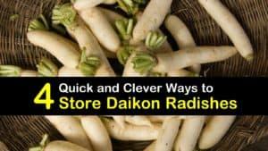 How to Store Daikon titleimg1