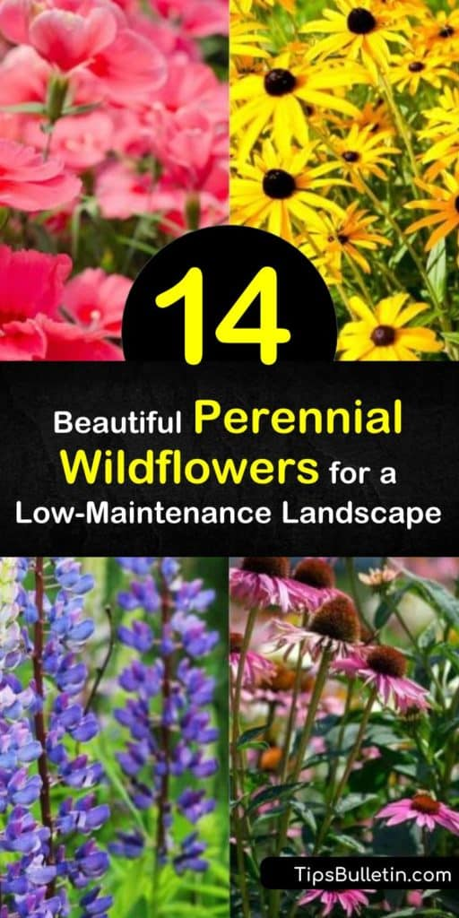 Find the easiest way to spread wildflower seed and have it germinate quickly so your flower beds are filled with the coreopsis, daisy, purple coneflower, and Mexican hat flower. These flowers bring sights and scents to your home that a hummingbird can't resist. #perennial #wildflowers #landscape