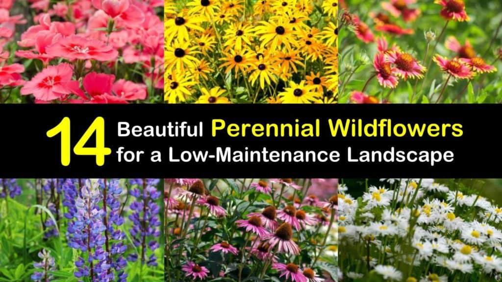Perennial Wildflowers titleimg1