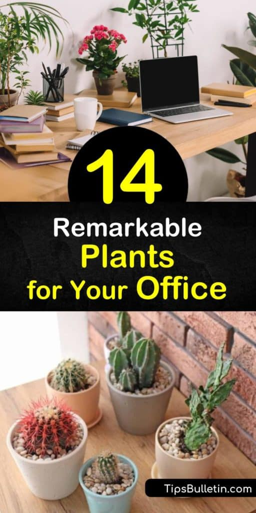 Learn how to create a pleasant office environment with indoor plants. Houseplants such as succulents are perfect for any office space, and philodendron, peace lily, and aloe plants are some of the easiest to grow in low light rooms. #office #plants